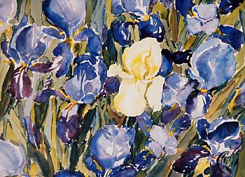 Königin der Blumen – die Iris – Aquarellmalerei