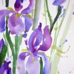 aquarell_iris_violett