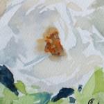 Aquarell - weiße rose - von Sonja Jannichsen