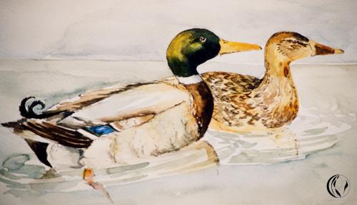 Tiere aus Nordfriesland – Illustration – Aquarellmalerei