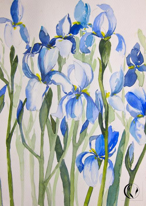 Iris in blau – colorierte Zeichnung