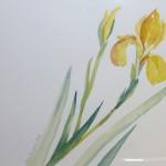 malen_am_meer_sylt_iris