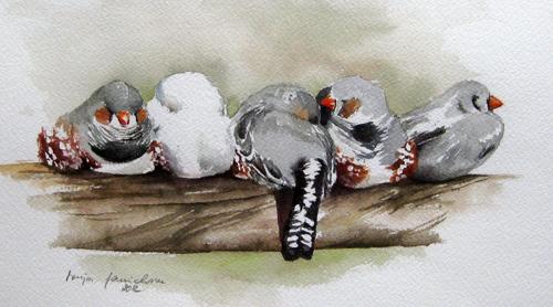 Zebrafinken – Aquarellmalerei