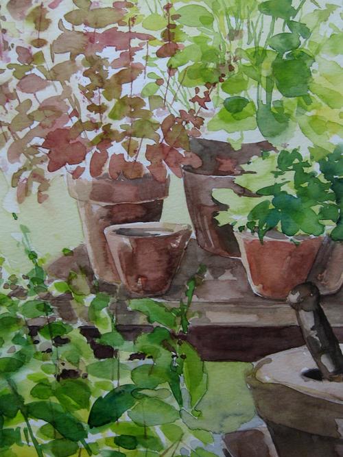 Gartenkräuter – Aquarellmalerei
