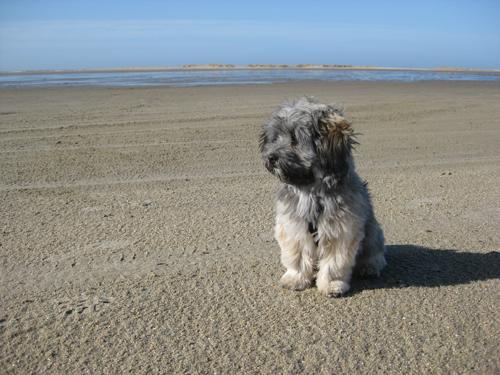 Weit und breit nur Sand.