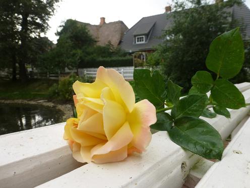 Manchmal sagt eine Rose mehr, als tausend Worte.